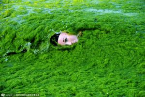 LAUREN'S FICTIONAL ALGAE THREAT IS REAL !!